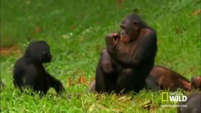 видео обезьяны трахаются