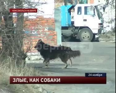 Убийство из-за собаки