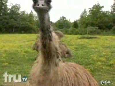 Словил страуса
