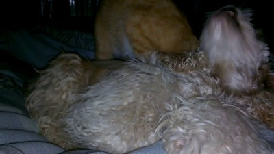 Массаж собаке от кота