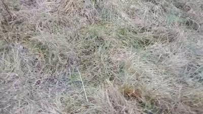 Возвращение на хутор: одиночество