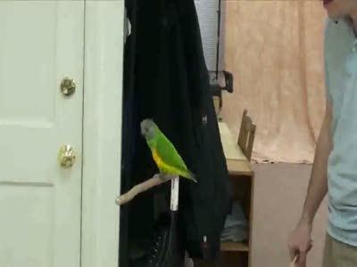 Классный попугай