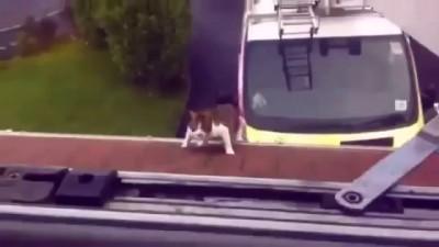 Подборка СМЕШНОГО видео котов! Funny Cats Compilation