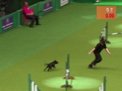Курьез на собачьих соревнованиях