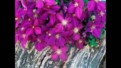 полевые цветы-это жизнь и любовь