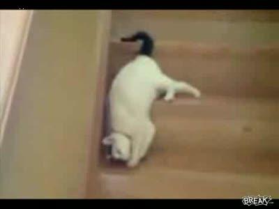 Кошка на лестнице