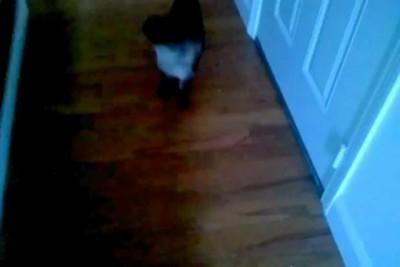 Каждый день я помогаю своему коту почесать ухо