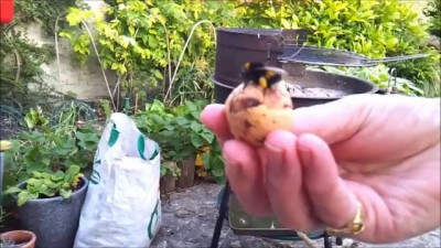 Bumble Bee Gives a High Five!! HD