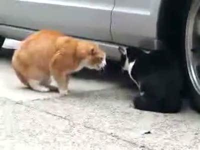Быдло-кот