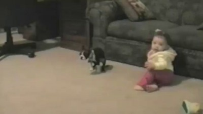 Dogs Being Jerks To Kids: Compilation