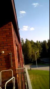 Squirrel's amazing jump off the building on to tree