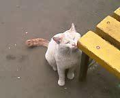 Компанейский кот