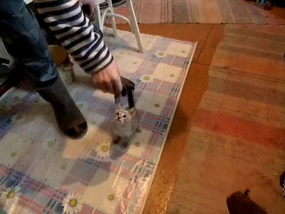 Жадный котенок