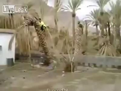 Докачался на пальме