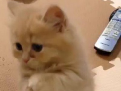 Little Kitten Puts Paws Together