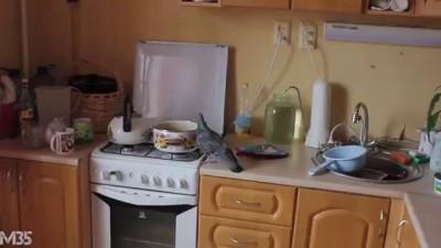 Как наглый голубь отжал у меня гречку в моей кухне