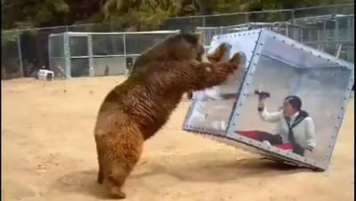 медведь шутит