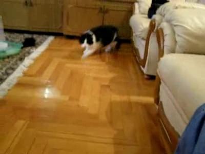 Бурундук гоняет кота