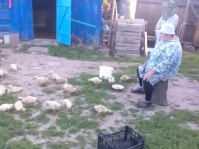 Бабушка из деревни строит уток