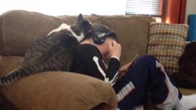 нежный кот