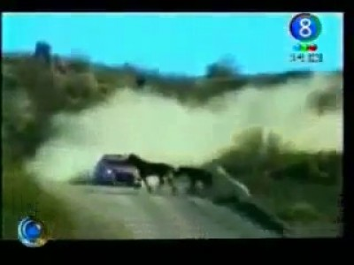 Fatal Crash. Rally car hits Horse !!!