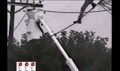 Перепутал лиану с электропроводами