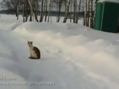 Кошачий триллер - 2