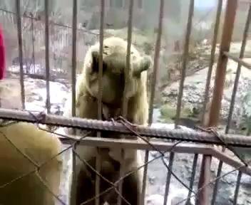 Медведь скромняшка