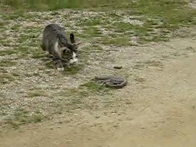 кот и змея