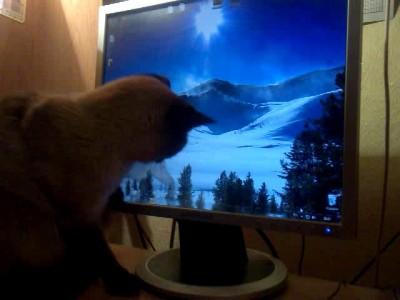 Кошка развлекается.