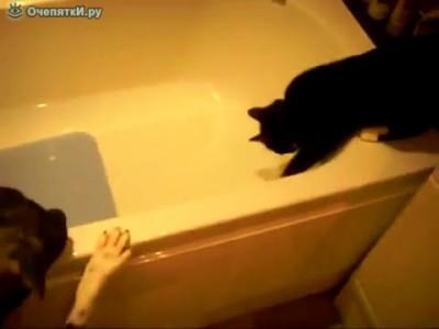 Кошак, иди искупайся!