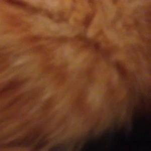 Упоротый тапок схватил кота