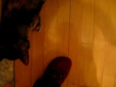 Кот с собачьими замашками