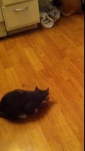 Котёнок и креветка