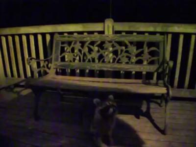 Baby Raccoons - 07 May 2015