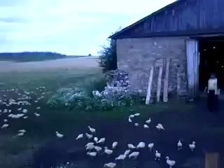Russian man orders ducks to attention, marches them into barn!