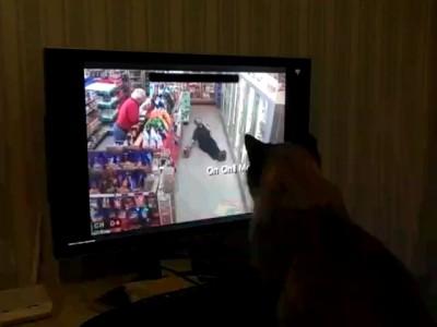 Наш кот сочувствует этому парню=)