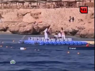сербский турист убил акулу