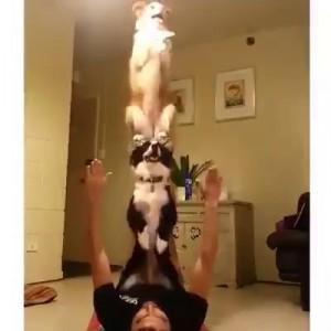 Собаки-акробаки