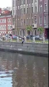 На канале Грибоедова возле Аларчина моста женщина прыгнула в воду за утенком.