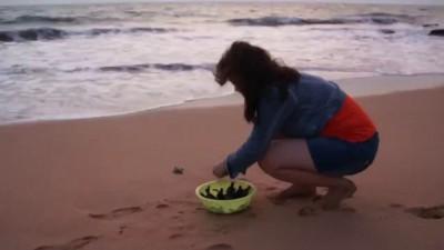 Отпускаем новорожденных черепашат в океан.