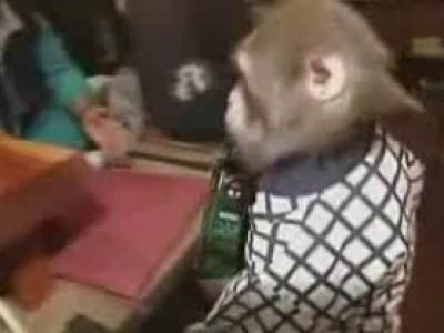 Макаки-официанты в японском баре