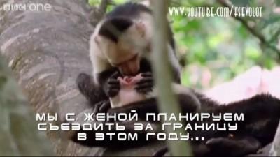 На языке животных