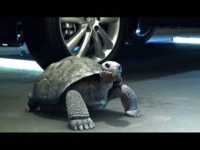 Hyundai сделал пародию на Top Gear