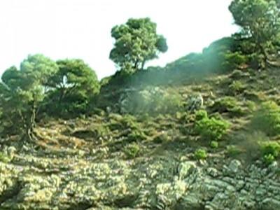 Зайцы на склоне