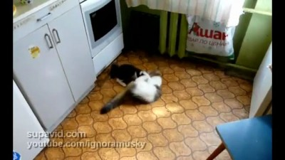 Битва за кухню
