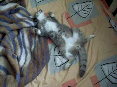 Кот спит???