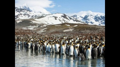 Планета пингвинов