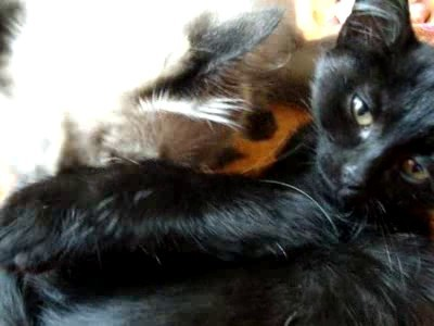 Усыновление по-кошачьи