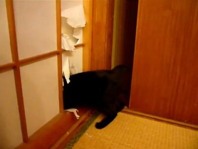 Кот роется в шкафу